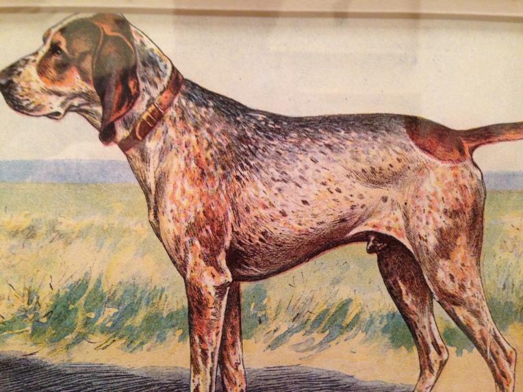 Bohemian bloodhound