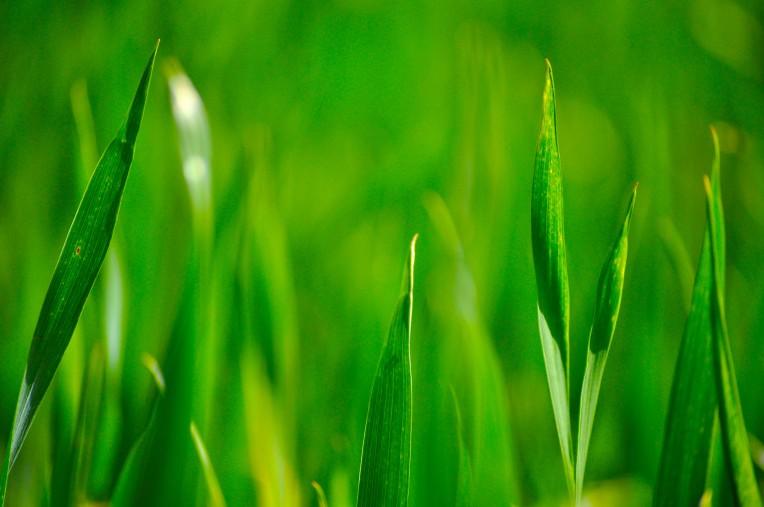 blade-grass-24